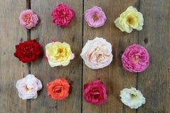 在木背景的五颜六色的玫瑰设计 库存照片