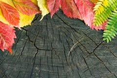 在木背景的五颜六色的秋叶 库存照片