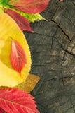 在木背景的五颜六色的秋叶 图库摄影