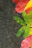 在木背景的五颜六色的秋叶 免版税库存图片