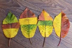 在木背景的五颜六色的秋叶 免版税库存照片