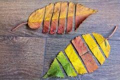 在木背景的五颜六色的秋叶 库存图片