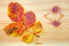 在木背景的五颜六色的秋天叶子 免版税库存照片