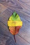 在木背景的五颜六色的秋天叶子 库存照片