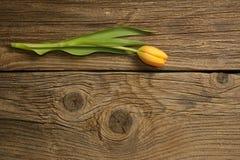 在木背景的充满活力的橙色郁金香花 免版税库存图片