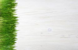 在木背景的发芽的麦子 免版税库存照片