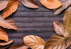 在木背景的叶子框架 与文本地方的秋天季节性横幅模板 库存图片
