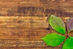在木背景的叶子 免版税库存照片