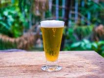 在木背景的啤酒草 免版税库存照片
