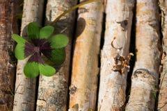 在木背景的四片叶子三叶草 库存图片