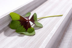 在木背景的四片叶子三叶草 免版税库存照片