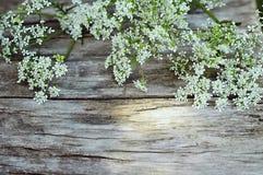 在木背景的夏天白花 免版税库存照片
