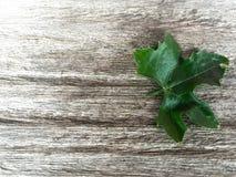 在木背景的常春藤金瓜 免版税图库摄影