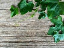 在木背景的常春藤金瓜 免版税库存照片