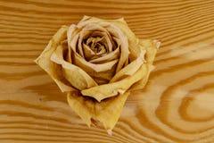 在木背景的干玫瑰色芽 库存照片