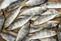 在木背景的干鱼 免版税库存图片