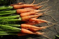 在木背景的年轻新鲜的红萝卜 免版税库存照片