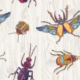 在木背景的手拉的甲虫 无缝的模式 Insec 免版税图库摄影