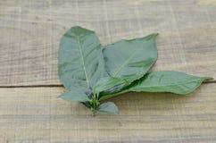 在木背景的新鲜的茶叶,装饰 免版税库存图片
