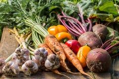在木背景的新鲜蔬菜 菜收获 图库摄影