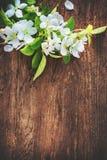 在木背景的春天开花的分支 免版税库存图片