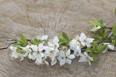 在木背景的春天开花的分支 图库摄影