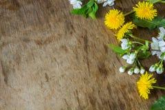 在木背景的春天花 免版税库存图片