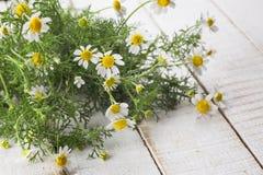 在木背景的春黄菊花 库存照片