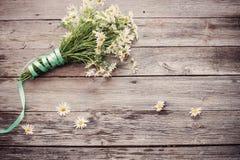 在木背景的春黄菊 库存照片