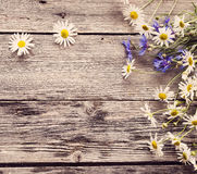 在木背景的春黄菊 库存图片