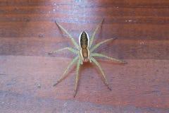 在木背景的木筏蜘蛛 库存照片