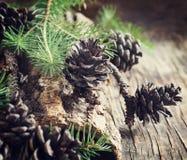 在木背景的杉木锥体 库存图片