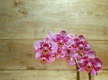 在木背景的桃红色兰花 免版税图库摄影