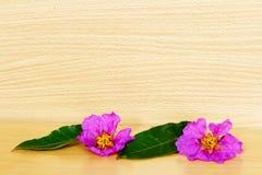 在木背景的桃红色花 免版税库存照片