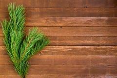 在木背景的毛皮树分支 免版税图库摄影