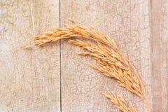 在木背景的水稻 水稻的耳朵 免版税库存图片