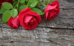 在木背景的玫瑰 库存图片