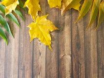 在木背景的秋叶纹理 免版税图库摄影