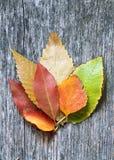 在木背景的秋叶 免版税库存照片