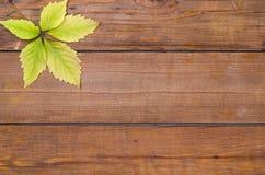 在木背景的秋天叶子,自由空间 免版税库存图片