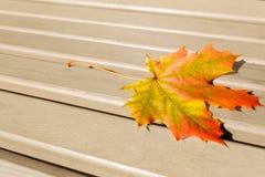 在木背景的秋天叶子 免版税图库摄影
