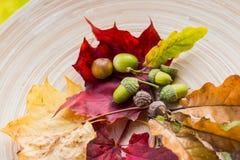 在木背景的秋天构成 秋叶,橡子,锥体,坚果 与五颜六色的叶子的平的位置 从Burj哈利法的看法 免版税库存图片