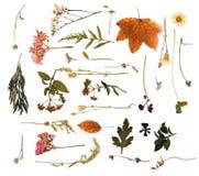 在木背景的秋天构成 免版税图库摄影