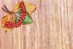 在木背景的秋天红色莓果群 顶视图 库存图片