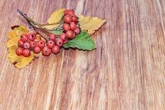 在木背景的秋天红色莓果群 免版税库存照片