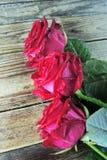 在木背景的红色玫瑰 库存照片