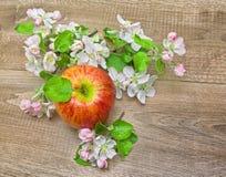 在木背景的红色苹果和苹果树花 库存图片