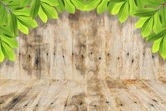 在木背景的绿色叶子 免版税库存图片