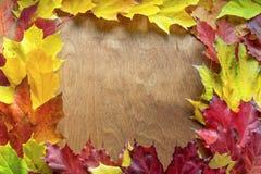 在木背景的美丽的槭树叶子 免版税库存照片