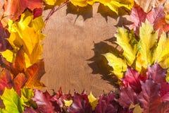 在木背景的美丽的槭树叶子 免版税库存图片